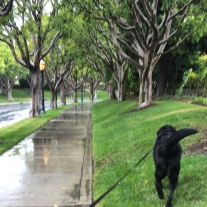 A rainy day walk - he loved walking in the we grass — except in our back yard